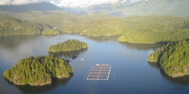 First Nation Blockades Tofino-Area Salmon