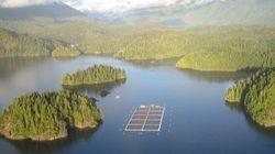 First Nation Blockades Tofino-Area Salmon