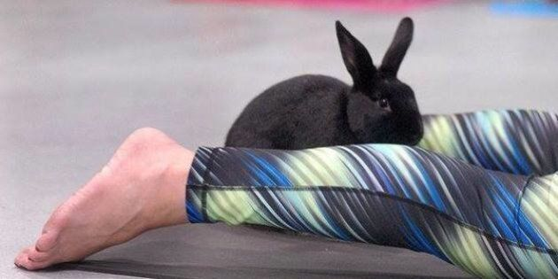 Bunny Yoga Is A Thing, Because