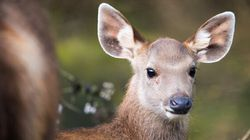 Portuguese Man Fined $1 For Harassing Deer In