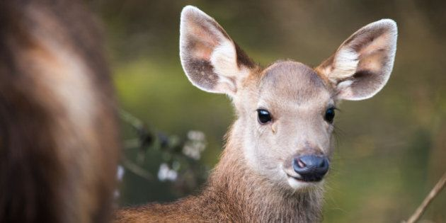 Rodolfo Lopes, Portuguese Man, Fined $1 For Harassing Deer In