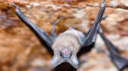 Time Running Out To Find Vancouver Man Who Handled Bat With