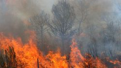 Don't Get Burned: How to Organize an Emergency Wildfire