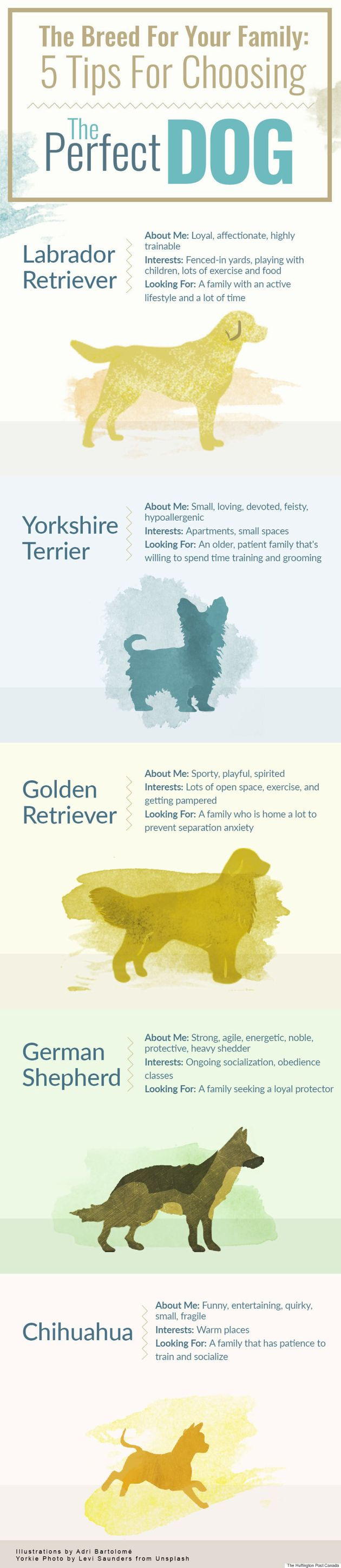 The Breed For Your Family: 5 Tips For Choosing The Perfect