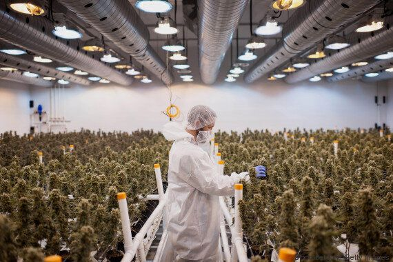 World's Largest Pot Grower To Launch Canadian Online