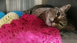 BooBoo The Missing Californian Cat Found In Ontario After 4