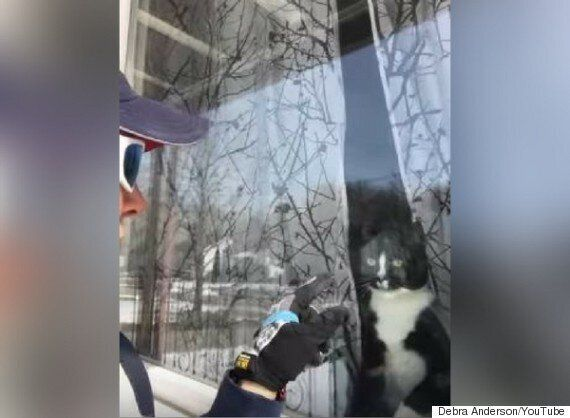 Canada Post Letter Carrier Faces Down Attack Cat Each Day On Hamilton, Ont.