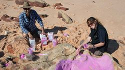 World's Largest Dinosaur Tracks Found In Australia's 'Jurassic