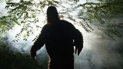 Idaho Driver Blames Sasquatch After She Hits A