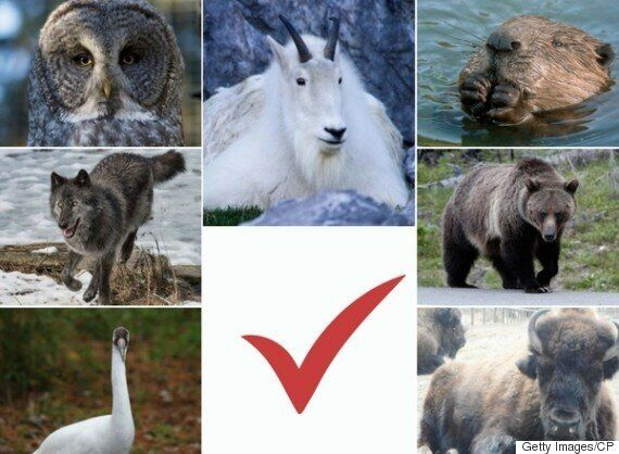 Calgary Zoo Opens Voting For Canada's Greatest