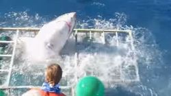 Frightening Video Shows Great White Shark Smashing Cage With Diver