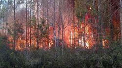 Florida Book Burning Ignites Wildfire, Destroys