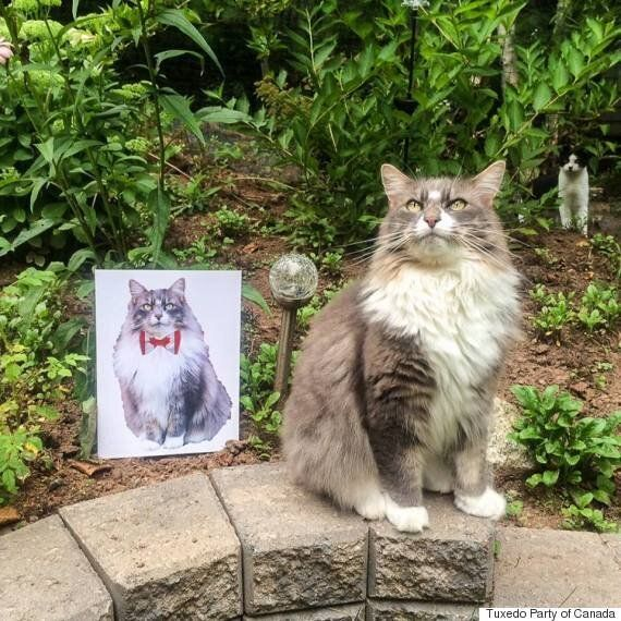 Vote Earl Grey: Fluffy Halifax Cat Running For Prime