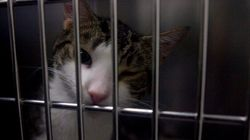 Canada's Humane Societies Feel Short-Changed By