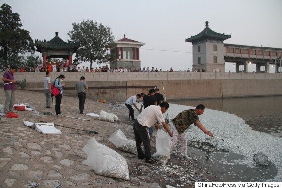 Tianjin Fish Wash Up Dead As Chinese Officials Warn Of High Cyanide