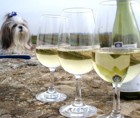 These Wines Are Your Answer for the Dog Days of