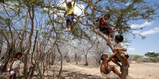 Wayuu indigenous boys play in a tree in Manaure, Colombia, Thursday, Sept. 10, 2015. Hunger exacerbated by a two-year-old drought is one of the biggest problems facing the Wayuu, a 600,000-strong ancestral tribe in La Guajira peninsula, the northernmost tip of South America. (AP Photo/Fernando Vergara)