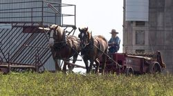 Rural P.E.I. Has Become An Amish