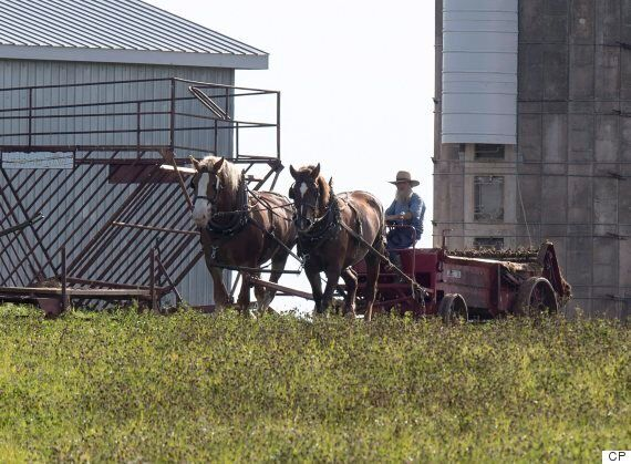 Amish Farmers In P.E.I. Are Creating Boost To Local