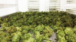 An Inside Look At One Of Canada's New Licensed Cannabis