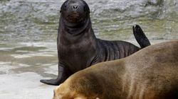 Sea Lion Deaths Are Not