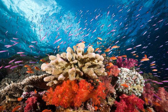 Coral Bleaching Caused By Climate Change Is Killing The Great Barrier