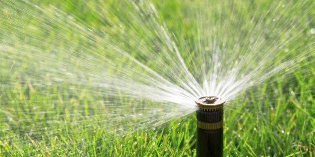 automatic sprinkler watering fresh