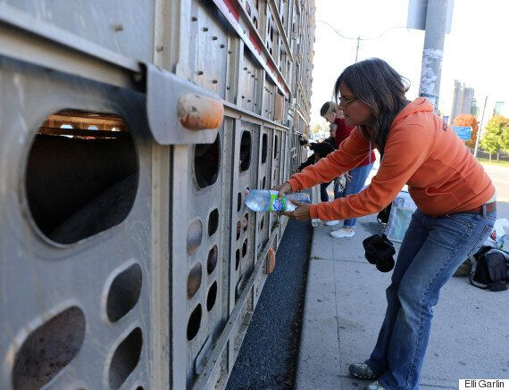 An Activist Is In Court, But It's Factory Farming On