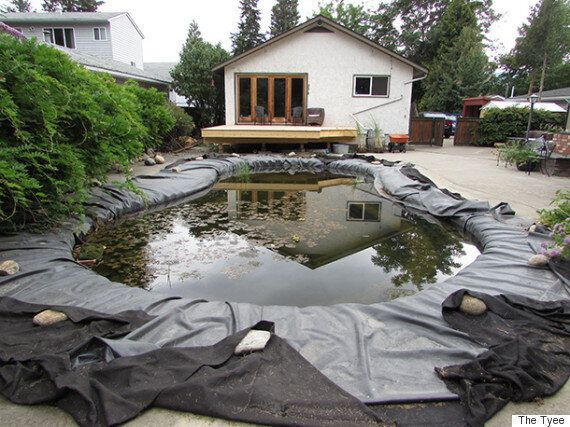 Frogs Kept Jumping Into Her Backyard Pool, So She Turned It Into A