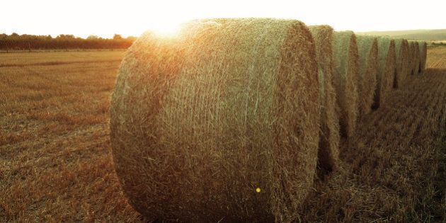 Alberta Drought 2015: Manitoba Farmer Donates 100 Hay