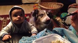 Watch This Talking Dog Totally PWN The Baby Next To