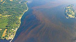 Toxic West Coast Algae Bloom Leads To Seafood