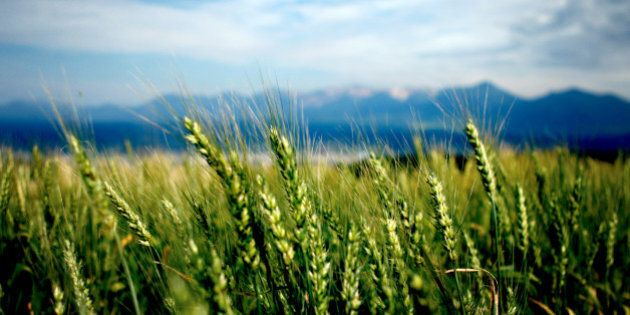 Canadian Wheat Board Sold To G3 Global Grain Group, Becomes G3