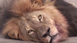 Why is Cecil Different From the Billions of Animals We