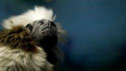 Calgary Zoo's Ties To Big Game Hunters