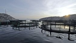 Senate Report Urges Creation Of Public Fish Farm