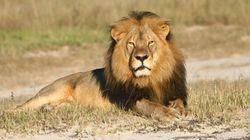 Cecil The Lion Hunter Has An Alberta