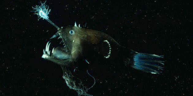 Deep oceanic