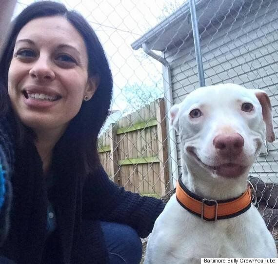Kobe The Pit Bull Has A Permanent Smile After Finding Foster