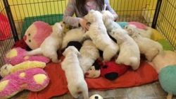 This Puppy Swarm Will Melt Your