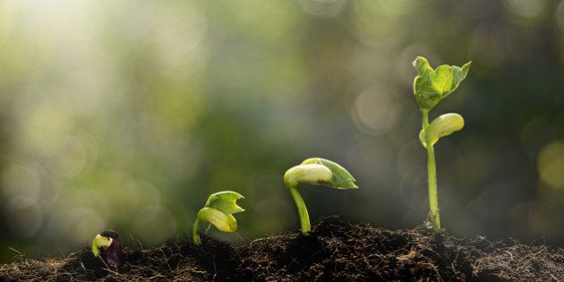 Young plant growing in the morning light and green bokeh background , new life growth ecology