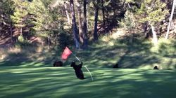 WATCH: Baby Bear Dances On B.C. Golf