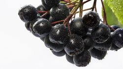 What Is The Aronia Berry, The Supermarket's New