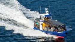 Another Boat Owned By Whale-Watching Company Runs