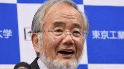 Japanese Scientist Wins Nobel Prize In