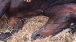 Horse Won't Wake Up, Is Basically You This