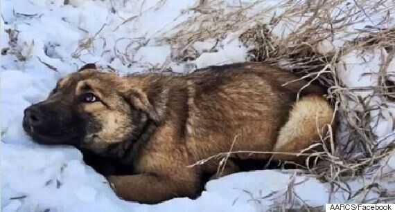 Alberta Puppy Spent 12 Hours In A Ditch With A Broken