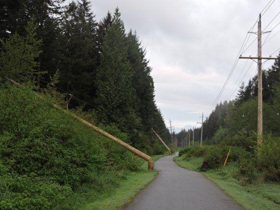 Surrey Hydro Poles Sawed Down By