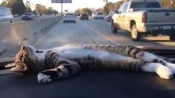 WATCH: This Cat Is The Cutest Dashboard Ornament