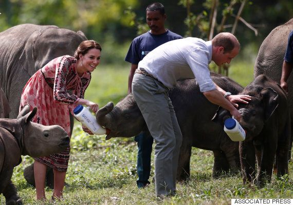 Royal Tour Of India Sees Kate, William Feed Baby Rhino And Elephant